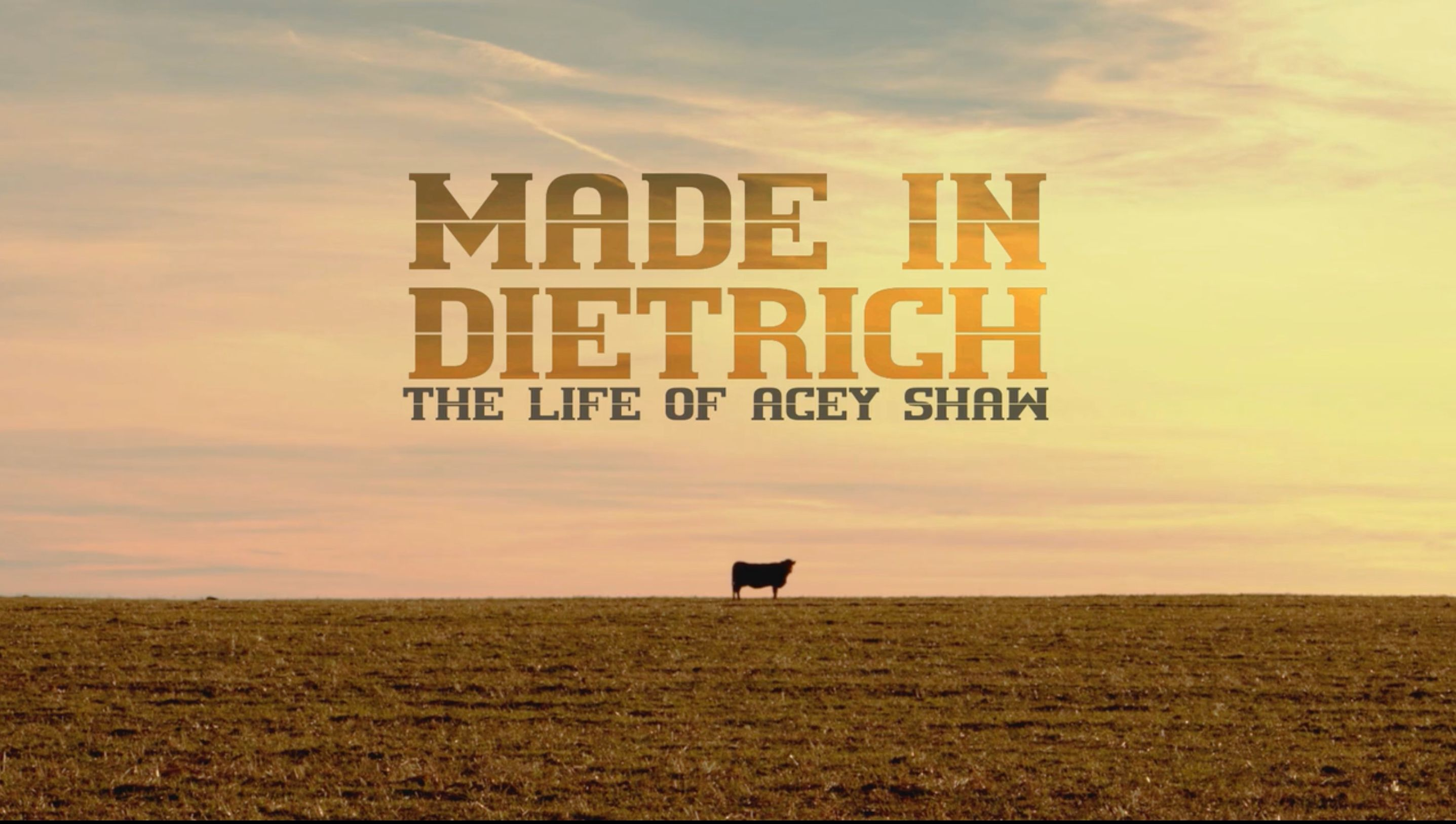 Made In Dietrich: Life of Acey Shaw